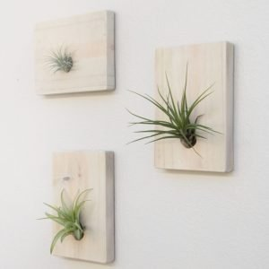 Air Plants Mounted Wood Wall