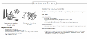 Caring for your airplant