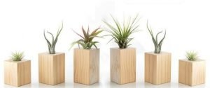 Wooden Blocks for Air Plants