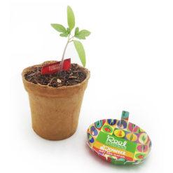 kids-vegetable-garden-kit-groweez